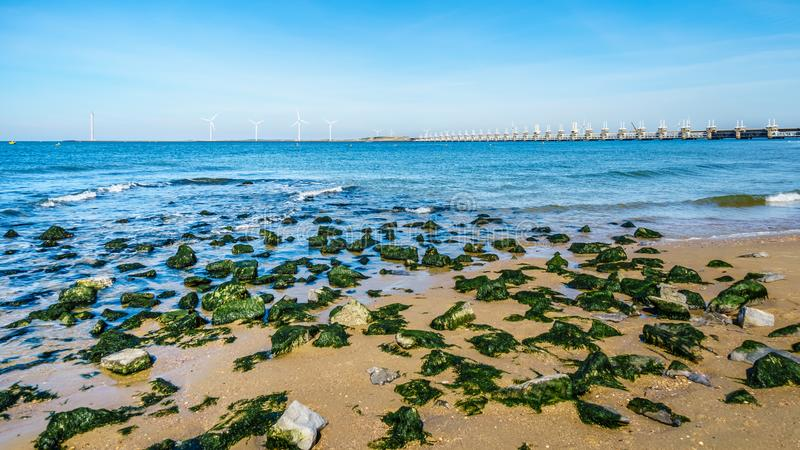 Rocks covered in seaweed at Banjaardstrand along the Oosterscheld. E inlet at the Schouwen-Duiveland peninsula in Zeeand Province in the Netherlands. The Storm stock photo