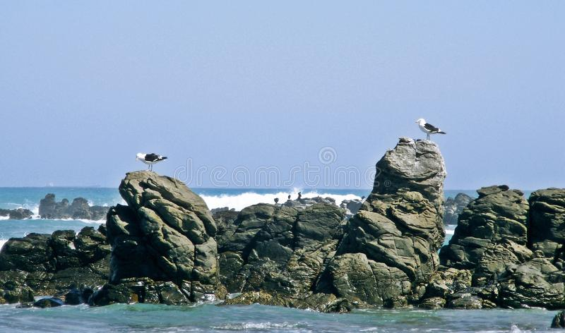 Rocks and gulls royalty free stock images