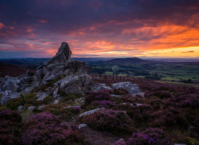Rocks and heather, Corndon hill from the Stiperstones, Shropshire at sunset royalty free stock photo