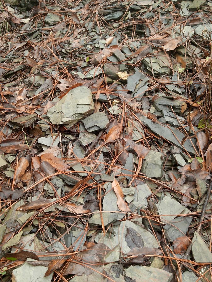 Rocks and leafs royalty free stock photography