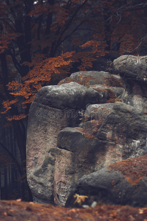 Rocks and old beech forest stock photo