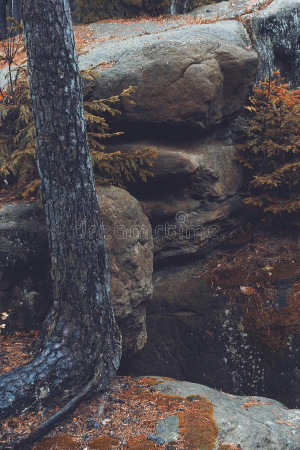 Rocks and old tree, autumn stock photography