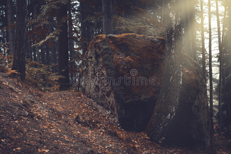 Rocks and old trees, autumn royalty free stock photography