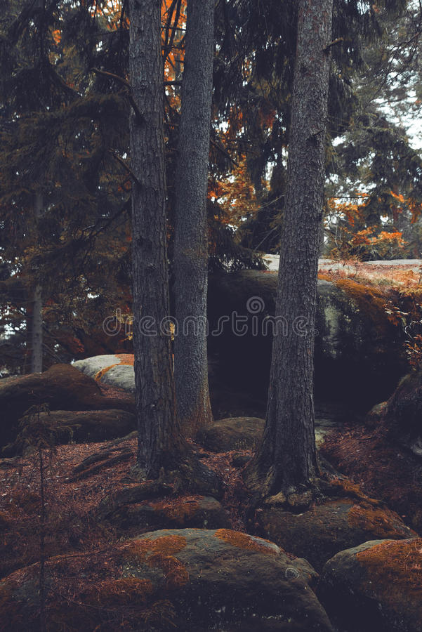 Rocks and old trees, autumn stock images