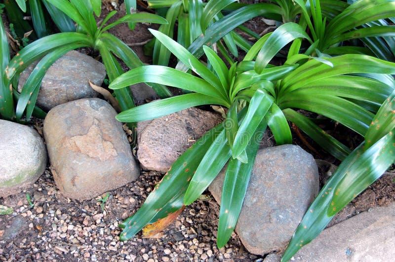 Rocks, stones and plants stock photo