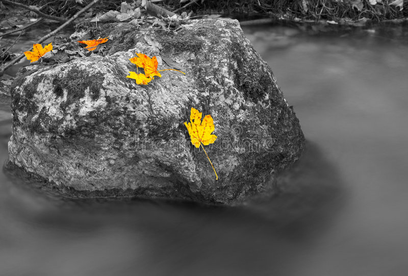Download Rocks in a stream stock photo. Image of leaf, murmuring - 3394396