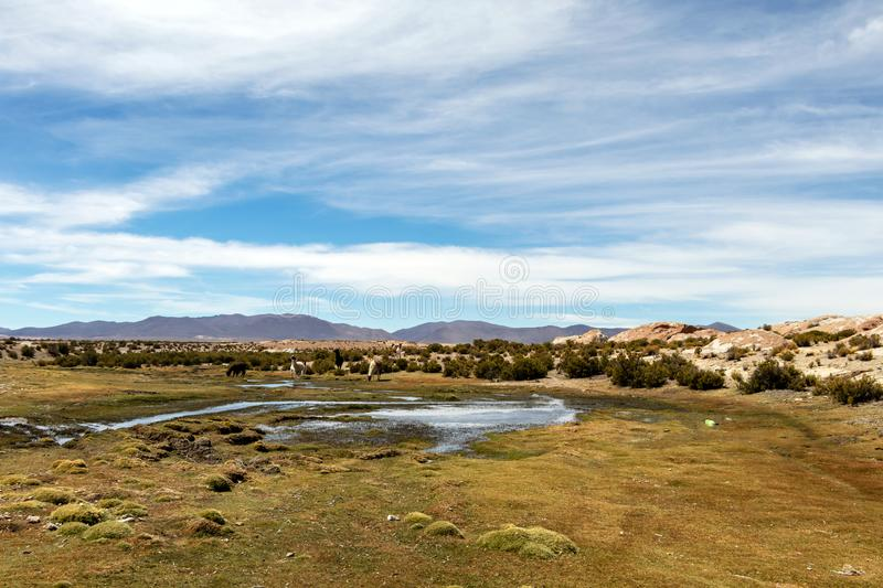 Desert landscapes with mountains in Bolivia at the dry season, dry vegetation is a natural background. Rocky and arid mountain landscape : Desert valley with royalty free stock image