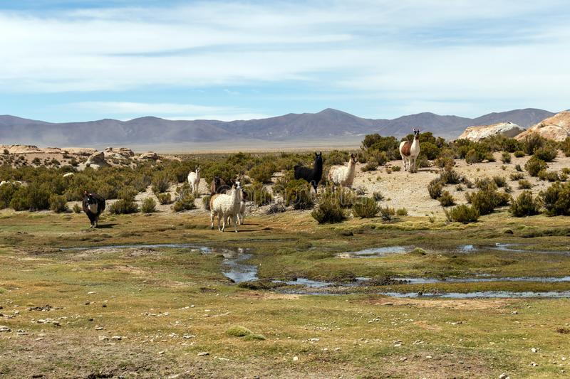 Desert landscapes with mountains in Bolivia at the dry season, dry vegetation is a natural background. Rocky and arid mountain landscape : Desert valley with stock images