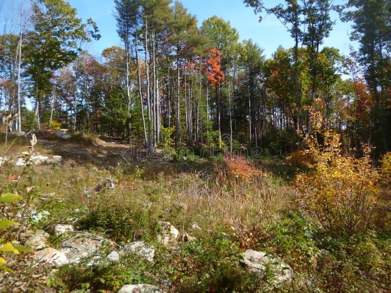 Rocky Autumn Forest con gli alberi alti immagine stock