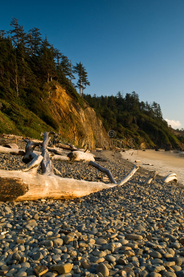 Free Rocky Beach And Driftwood Logs Royalty Free Stock Image - 7343046