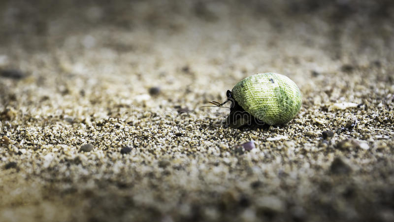 Rocky Beach Crab stock foto's