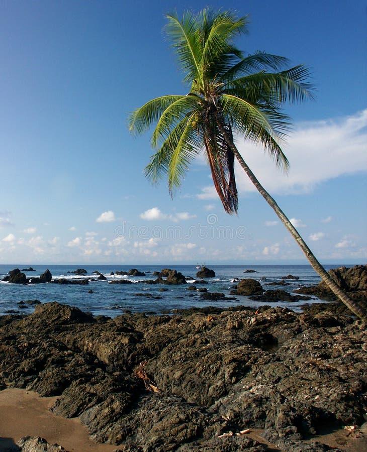 Rocky beach with palm tree stock image