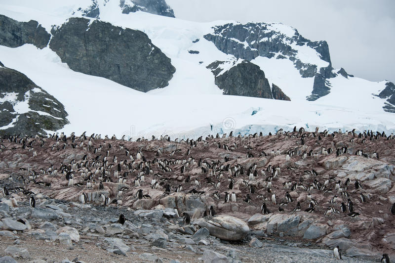 Download Rocky Beach With Penguins In Antarctica Stock Photo - Image: 27813716