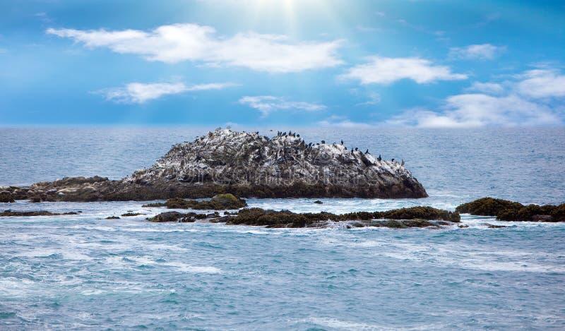 Download Rocky Birds stock photo. Image of pelecanus, shore, pelican - 11259440