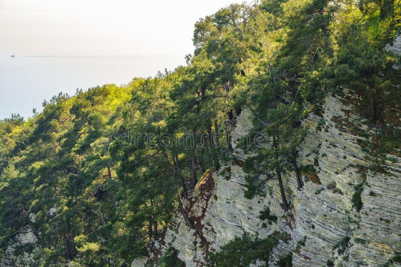 Rocky cliff in dense green forest. Spring colors in the mountain forest. The sea is visible on the horizon. Natural background. Spring season stock photo