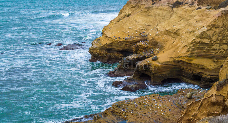 Rocky cliffs with seabirds in San Diego. Rocky cliffs covered with seabirds along the Pacific ocean at Point Loma in San Diego, California royalty free stock photography