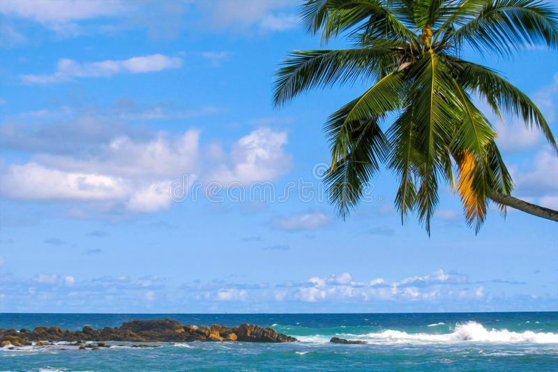 Rocky ocean shore and palm tree against the sky stock photos
