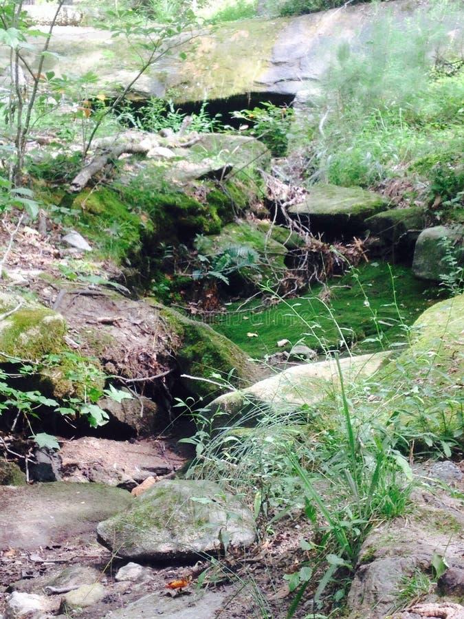 Rocky Foliage lizenzfreies stockfoto