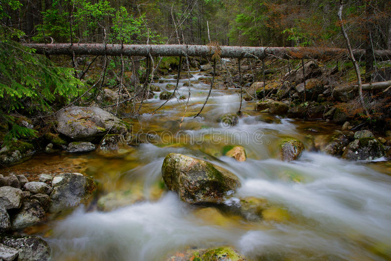 Rocky forest creek royalty free stock image
