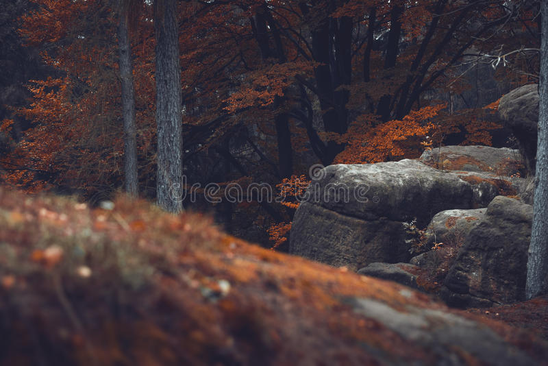 Rocky forest stock images
