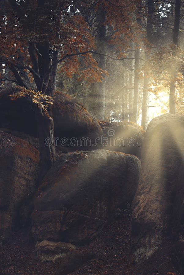 Rocky forest stock photo