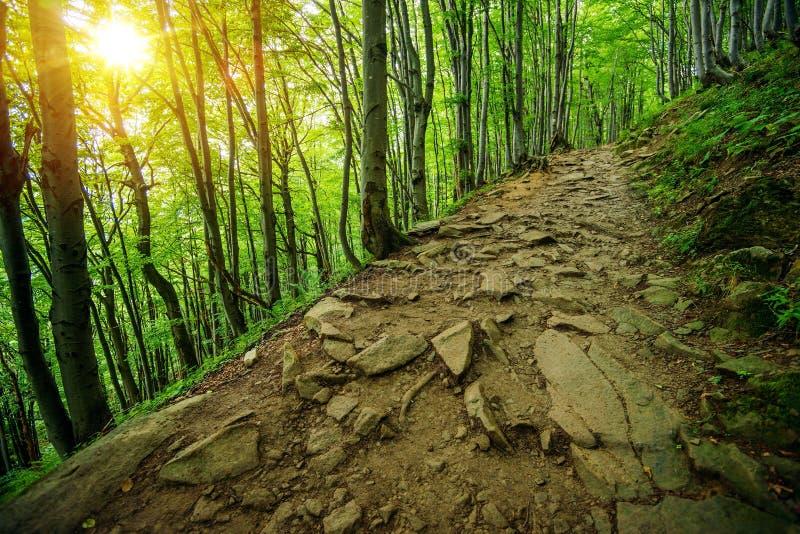 Rocky Forest Trail Path royaltyfri foto