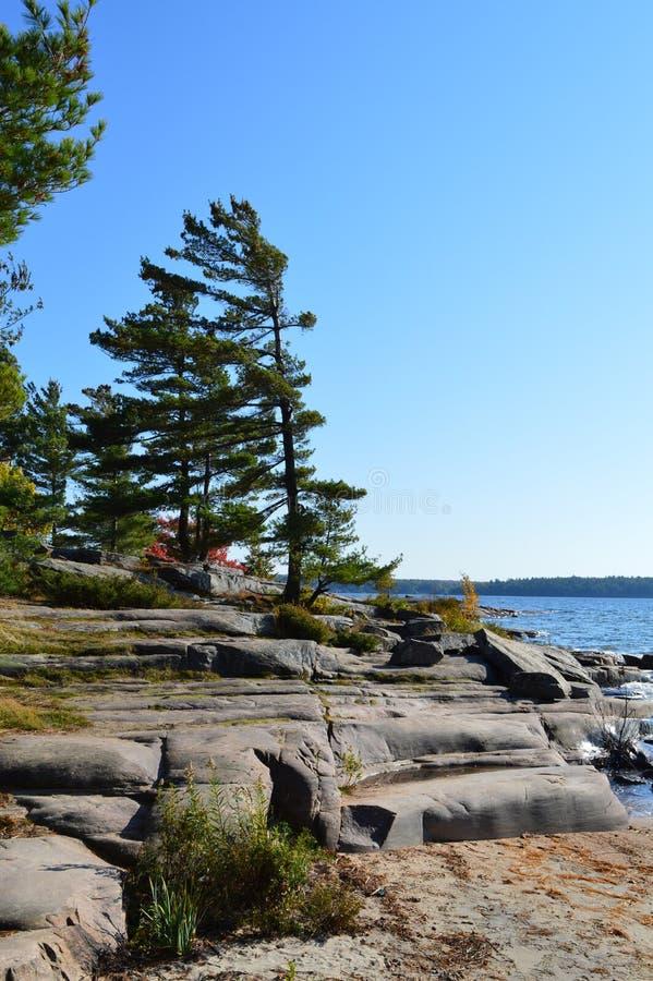 Rocky Georgian Bay Shoreline & Windswept sörjer royaltyfria bilder