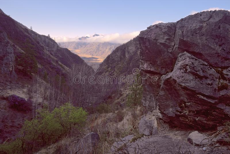 Rocky gorge in the Altai mountains. Rocky gorge with sharp huge stones. Mountain slopes overgrown with bushes and trees. Mountains in Golden light in the stock image