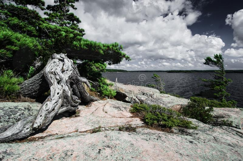 View on Georgian Bay, Lake Huron granite shore with old dry tree. The rocky granite shore of Georgian Bay, Killbear Provincial Park, Ontario, Canada stock photo