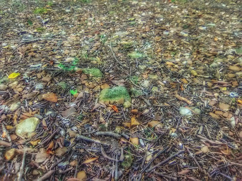 Rocky ground with moss covered rocks in Oklahoma stock photos