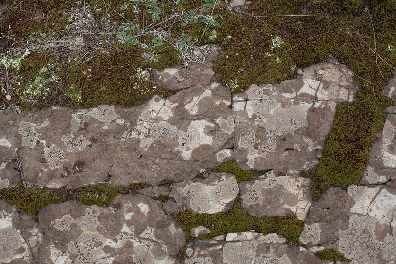 Rocky ground with moss royalty free stock photography