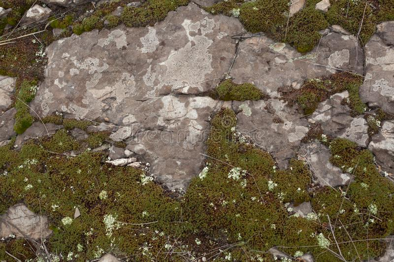 Rocky ground with moss royalty free stock image