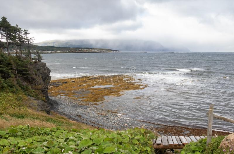 Rocky Harbor newfoundland seascape. Blustery rainy autumn day at Rocky Harbour Newfoundland Canada . Yellow seaweed , wet green grasses and vegetation, wind royalty free stock photo