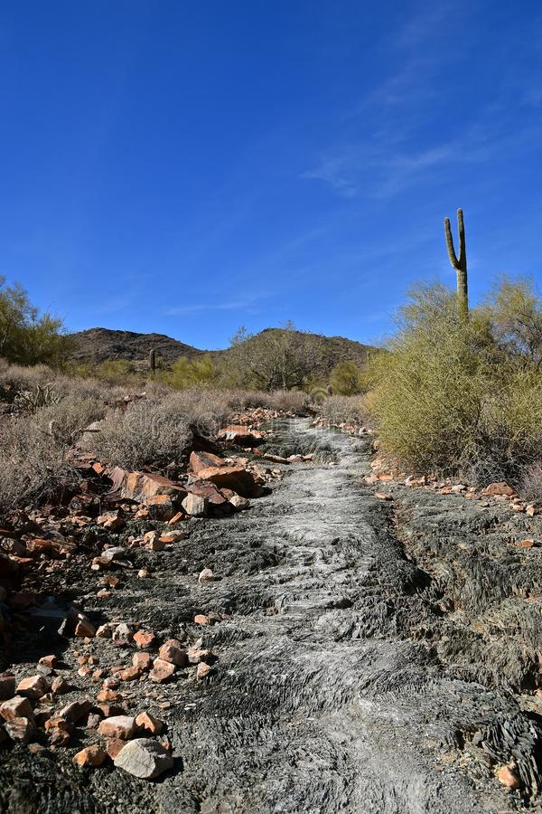 Rocky hiking path in a desert setting. A cactus tree stands alongside a rugged walking trail in a mountainous environment stock photo