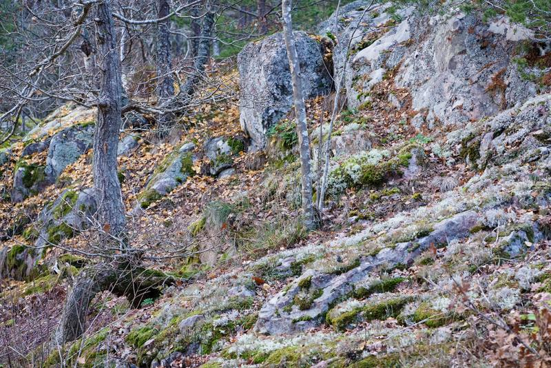 A rocky hill slope in the autumn royalty free stock photography