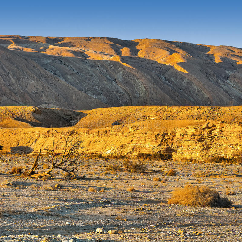Rocky Hills. Of the Negev Desert in Israel royalty free stock image