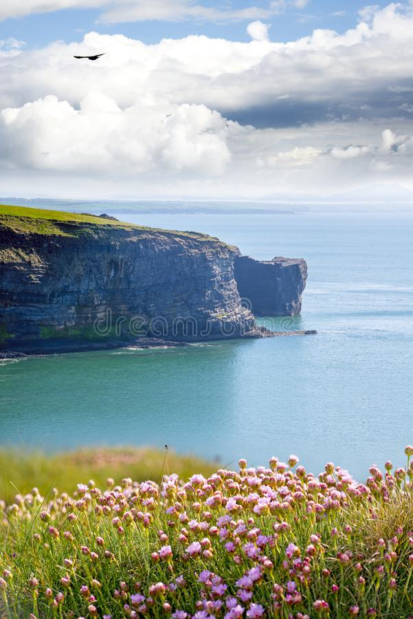 Coastline and cliffs with flowers. Rocky jagged coastline and cliffs with flowers in county kerry ireland on the wild atlantic way royalty free stock images