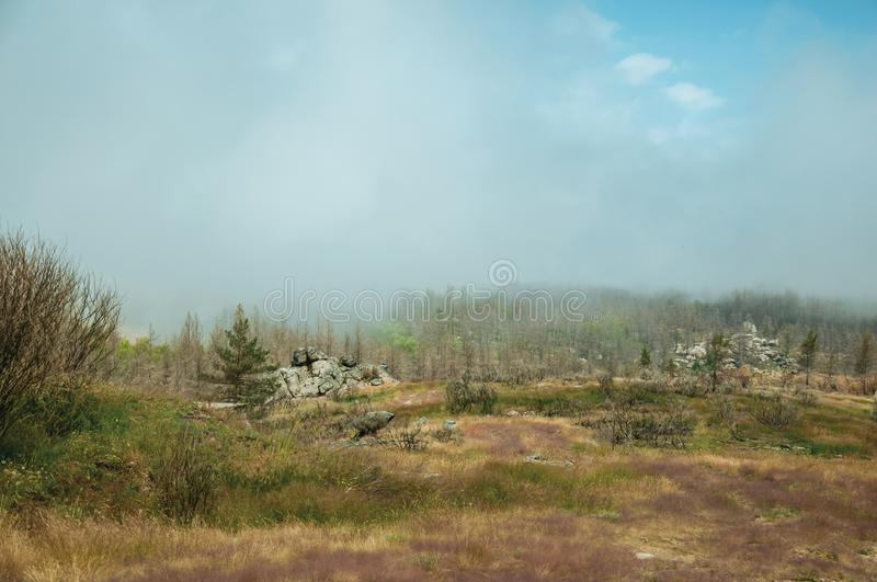 Rocky landscape with a burnt forest covered by mist royalty free stock image