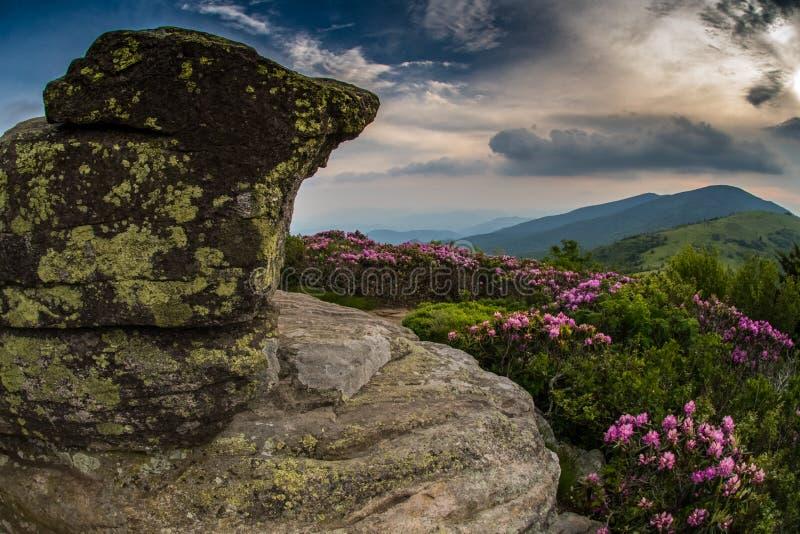 Rocky Lookout op Jane Bald met Rododendron royalty-vrije stock foto's