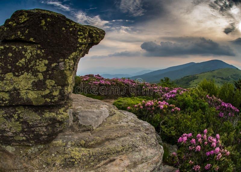 Rocky Lookout op Jane Bald met Rododendron royalty-vrije stock afbeelding