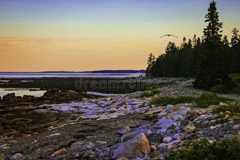 Rocky Maine Coast bij Schemer stock afbeeldingen