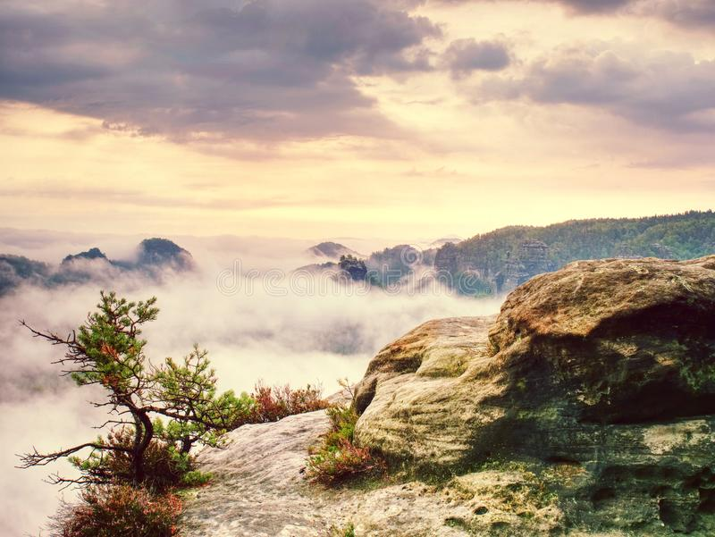 Rocky and misty mountains from hiking trail. Bent pine tree stock photography