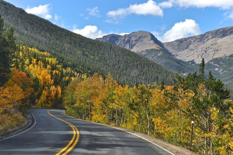 Rocky Mountain Aspen immagine stock libera da diritti