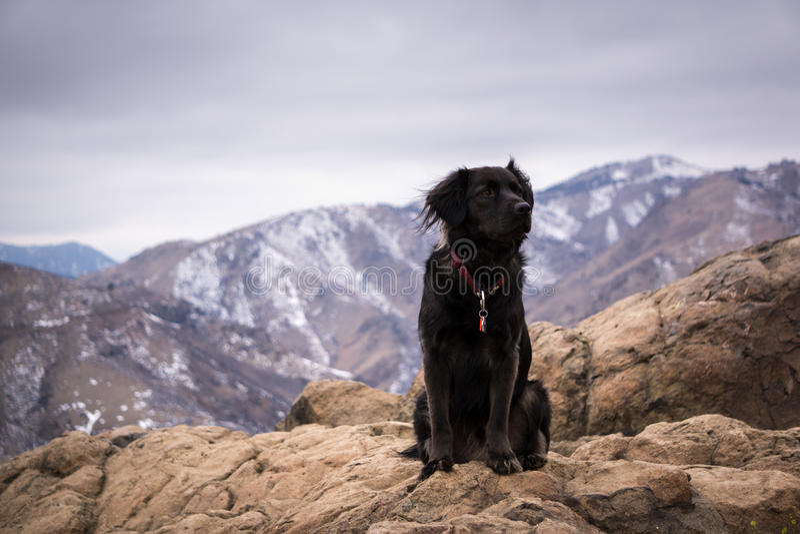 Rocky Mountain Dog stock image