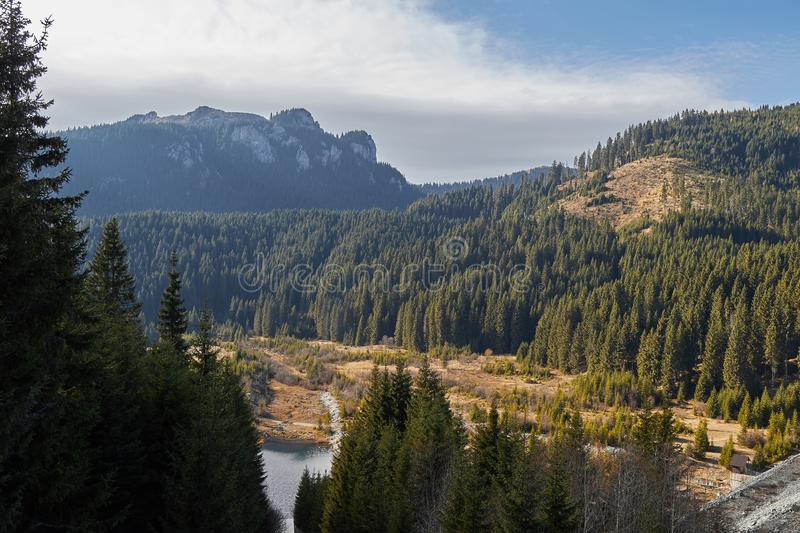 Rocky mountain and forest stock images