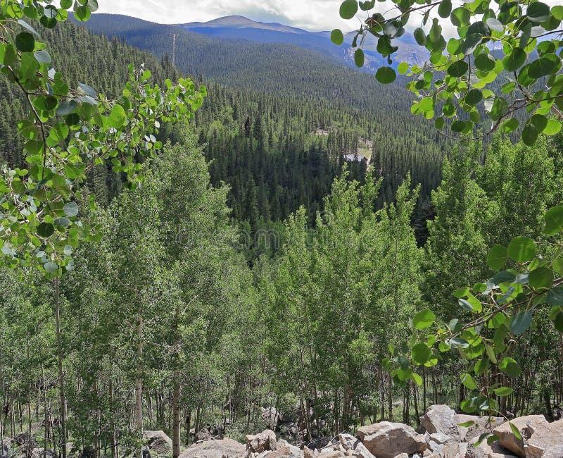 Rocky Mountain Landscape i Colorado fotografering för bildbyråer