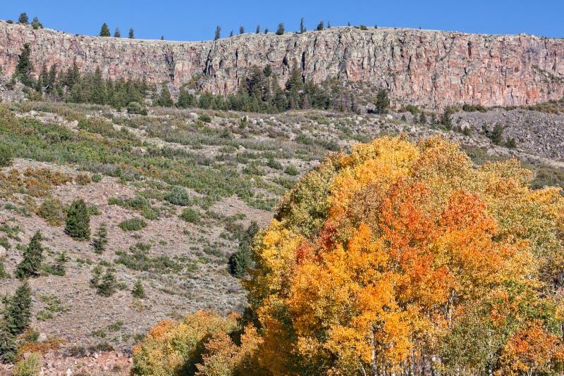 Rocky Mountain Landscape i nedgång royaltyfri fotografi