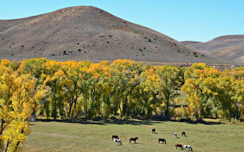 Rocky Mountain National Park images libres de droits