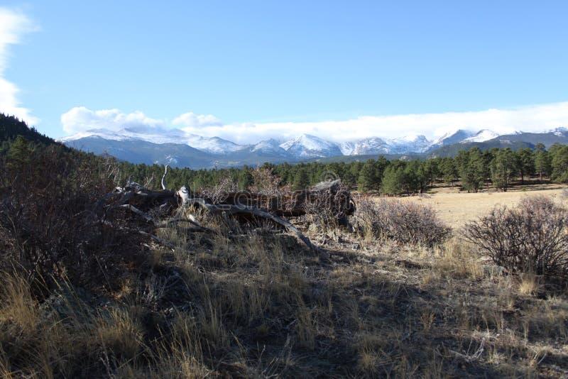 Rocky Mountain National Park Deadwood fotos de stock