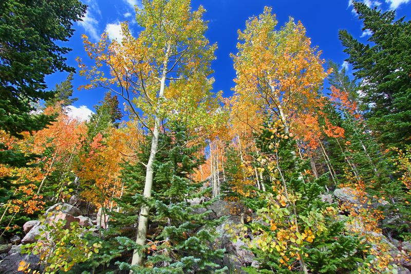 Rocky Mountain National Park Fall-Kleuren royalty-vrije stock foto